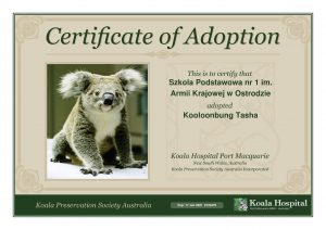Koala Adoption Certificate 11 1