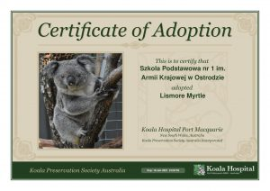 Koala Adoption Certificate 13 1
