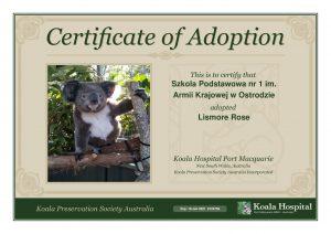 Koala Adoption Certificate 14 1