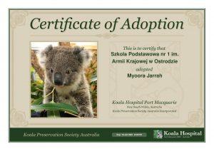 Koala Adoption Certificate 15 1