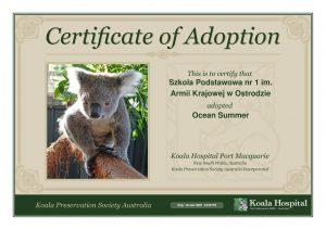 Koala Adoption Certificate 16 1