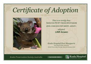 Koala Adoption Certificate 19 1