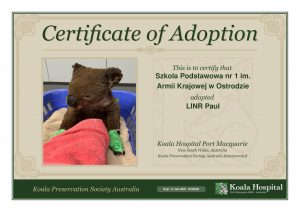Koala Adoption Certificate 2 x2 1