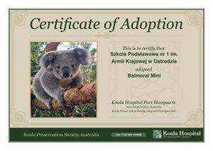 Koala Adoption Certificate 3 x2 1
