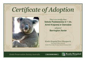 Koala Adoption Certificate 4 1
