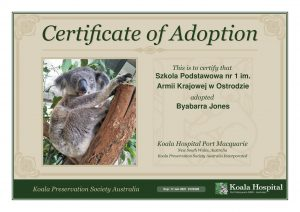 Koala Adoption Certificate 5 1