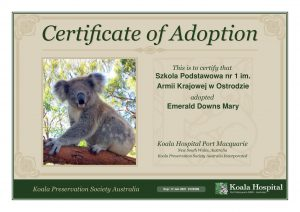 Koala Adoption Certificate 7 1
