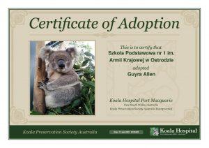 Koala Adoption Certificate 8 1