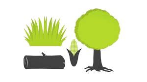 rosliny biopaliwo
