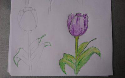 Jak narysować tulipana